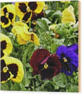 Pansies Of A Different Color Wood Print