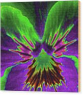 Pansy 02 - Photopower - Thoughts Of You Wood Print