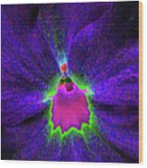 Pansy 05 - Photopower - Thoughts Of You Wood Print