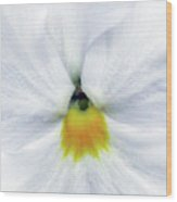 Pansy 05 - Thoughts Of You Wood Print