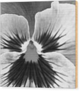 Pansy 06 Bw - Thoughts Of You Wood Print