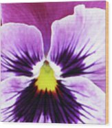 Pansy 07 - Thoughts Of You Wood Print