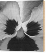 Pansy 09 Bw - Thoughts Of You Wood Print