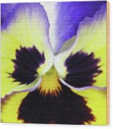 Pansy 09 - Thoughts Of You Wood Print