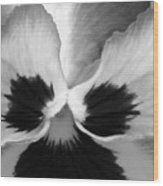 Pansy 10 Bw - Thoughts Of You Wood Print