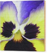 Pansy 10 - Thoughts Of You Wood Print