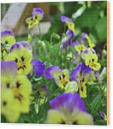 Pansy Bed Wood Print
