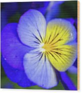 Pansy Close-up Square Wood Print