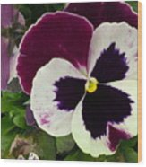 Pansy Face Wood Print