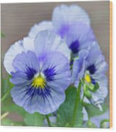 Pansy Flowers Wood Print