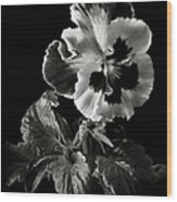 Pansy In Black And White Wood Print