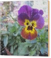 Pansy Perfection Wood Print