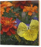 Pansy Play Wood Print