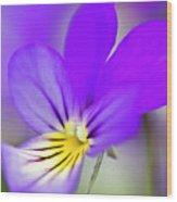 Pansy Violet Wood Print