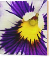 Pansy Violets Wood Print by Ryan Kelly