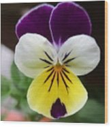 Pansy White Wings Wood Print