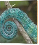 Panther Chameleon Tail Wood Print
