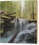 Panther Creek In Gifford Pinchot National Forest Wood Print