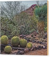 Papago And Barrels Wood Print