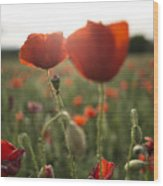 Papaver Rhoeas Wood Print