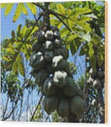 Papayas On A Tree Wood Print