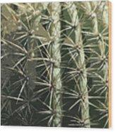 Paper Cactus Wood Print