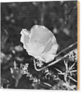 Paper Flower In B And W Wood Print