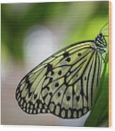 Paper Kite Butterfly- 2 Wood Print