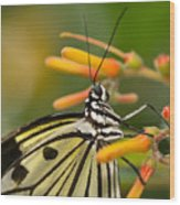 Paper Kite Butterfly With Orange Flower Wood Print