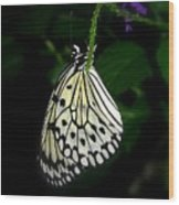 Paperwhite Butterfly Wood Print