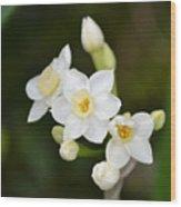 Paperwhites - Narcissus Papyraceus Wood Print