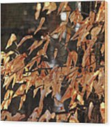 Papery Beech Leaves Wood Print