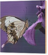 Papilio Dardanus On Violet Flowers Wood Print