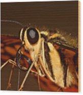 Papilio Demoleus Wood Print