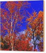 Paprika Wood Print by Ed Smith