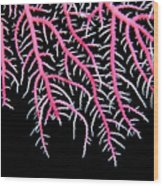 Papua New Guinea, Marine Wood Print