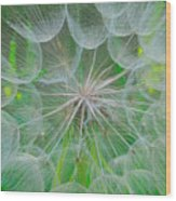 Parachutes For Seeds Wood Print