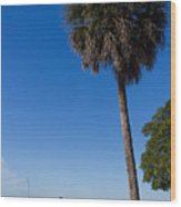 Paradise In Sarasota, Fl Wood Print by Michael Tesar