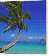 Paradise Palm Over Lanikai Wood Print
