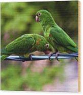 Parakeet Couple Wood Print