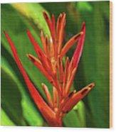 Parakeet Flower Exotic Wood Print