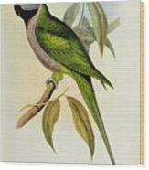 Parakeet Wood Print