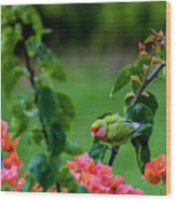 Parakeet South Maui Wood Print