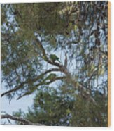 Parakeets Wood Print