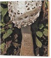 Parasol Mushroom           Macrolepiota Procera           August     Indiana   Wood Print