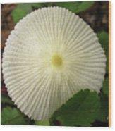 Parasol Mushroom Wood Print