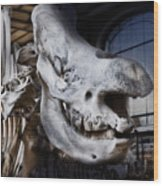 Paris Gallery Of Paleontology 3 Wood Print
