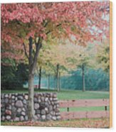 Park In Autumn/fall Colors Wood Print