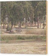 Park Near The Source Of The Yarkon River Wood Print