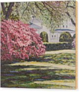 Park Spring Blossom With Shadows Wood Print